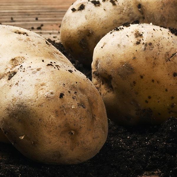 Bio Save® fungicide applied to fresh post-harvest potatoes