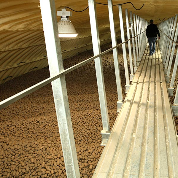 Chlorine Dioxide applied on potatoes in storage.