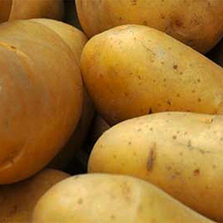 FruitGard™ Potato Storage Treatment