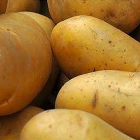Fruit Gard™ Potato Storage Treatment