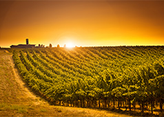 Columbia Valley Wine Region of the Tri-Cities
