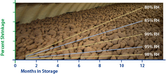 Affect of relative humidity (RH) on potato weight loss in storage at 45˚F.