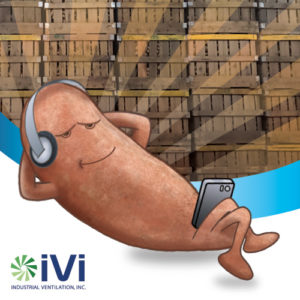 Sal, IVI's sweet spokes potato lounging around
